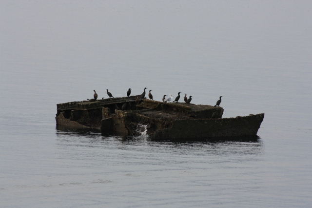 Cormorants on Blockship by Barrier 3