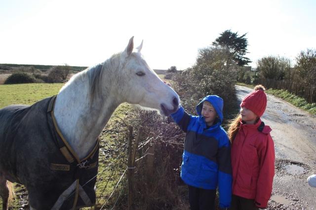 Horses at The Ridge