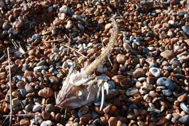 Dead Fish on Hastings Working Beach