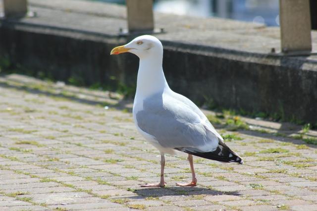 Seagull at Newhaven Marina