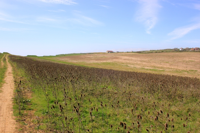 Fields to the other side of the Clifftop Path (colours enhanced)