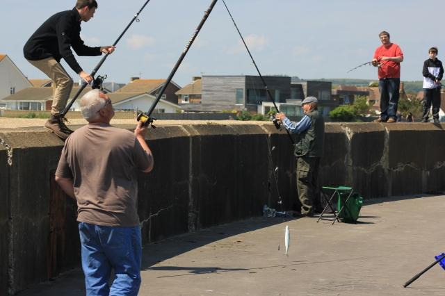 Catching a Fish at Shoreham Harbour