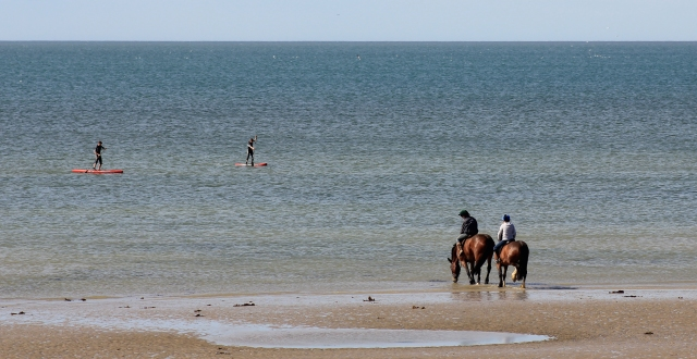 Horses Watching Paddleboarders at Goring-By-Sea