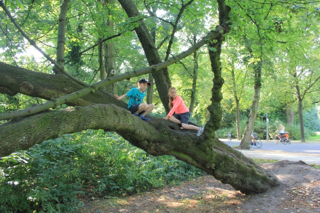 Tree Climbing in Vondelpark