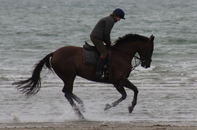 Horse at West Wittering cropped