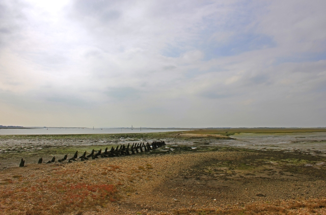 Stakes at Cobnor Rithe