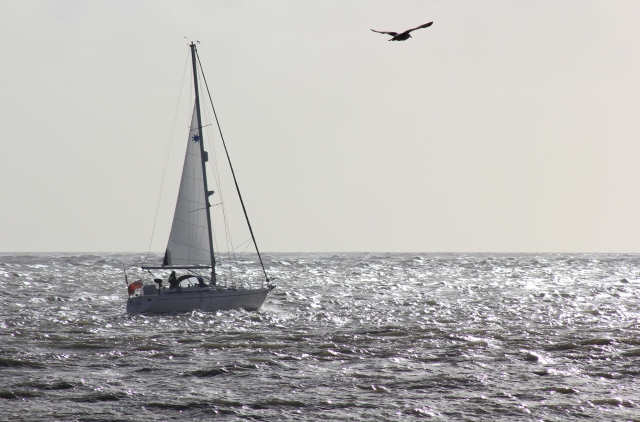 12 - Yacht and Gull