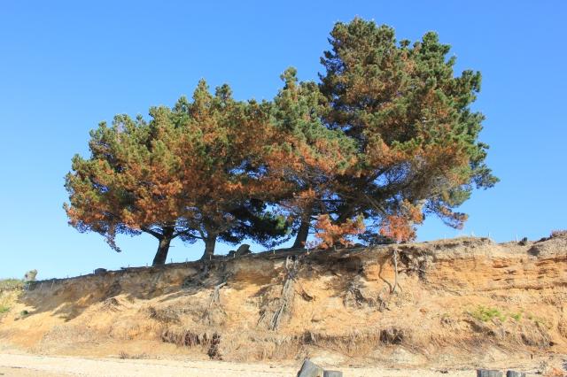 Lepe Coastal Erosion
