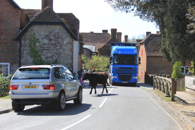 Cow Stopping Traffic, Beaulieu