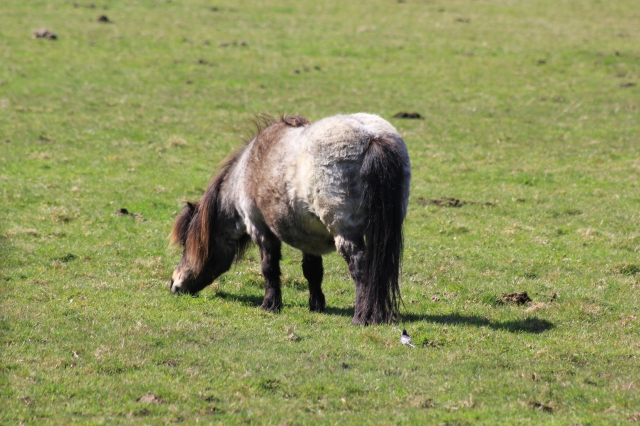 Tiny Pony
