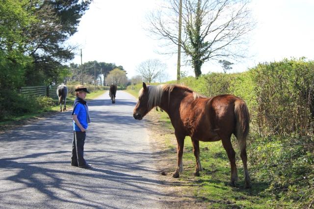 Ben Meets a Horse