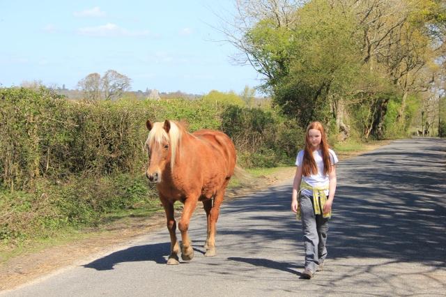 Guest Walking Horse