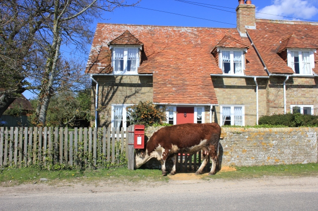 Cow and Cottage
