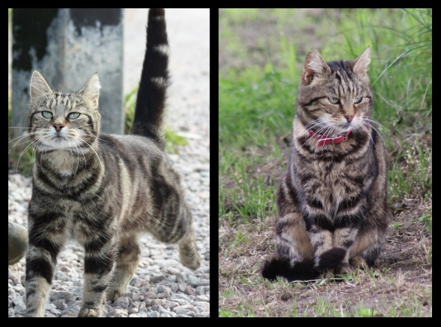 The Friendly Cat from Grain 2012 and 2014