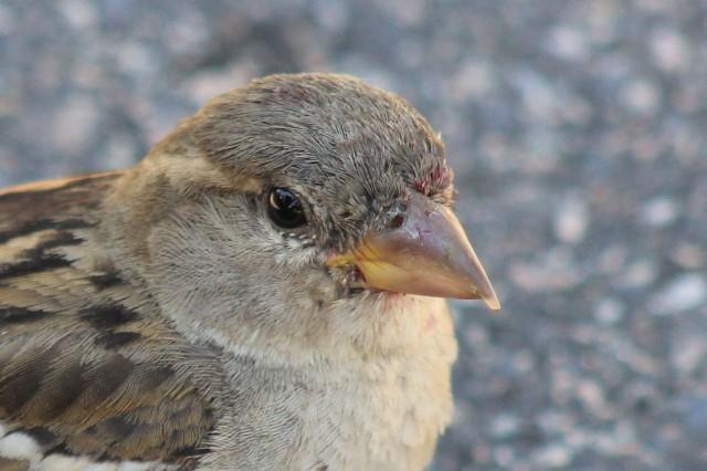 Sparrow outside Viking Ship Museum