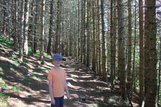 Pine Tree Forest Halfway up Hanguren