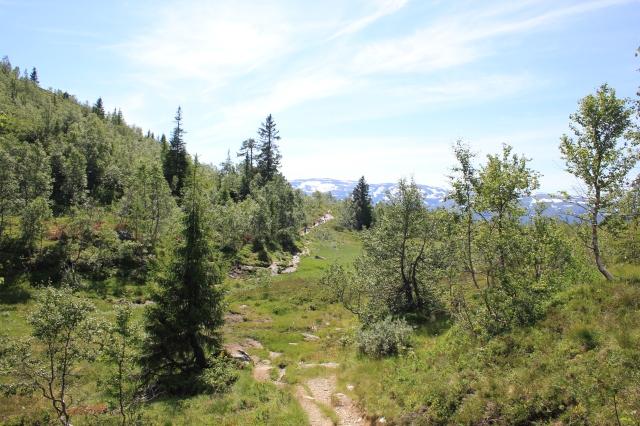 The Path to Lake Valbergstjørni
