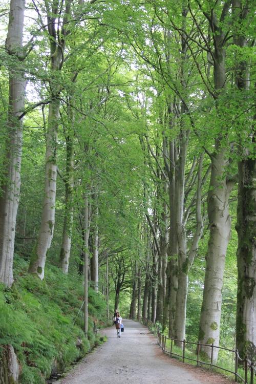 The Walk up Mount Floyen