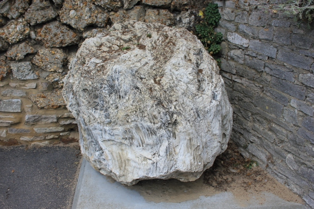 Fossilised Tree Stump