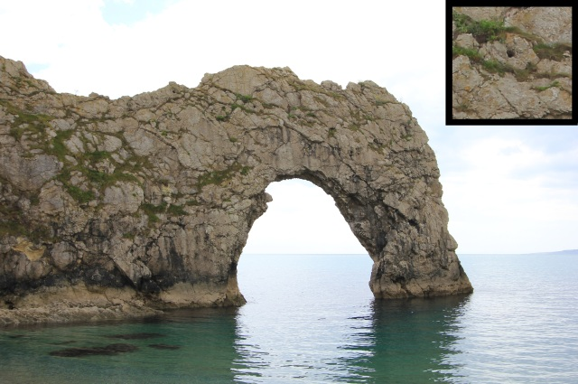 Durdle Door with Close-Up of Cycad Tree Holes